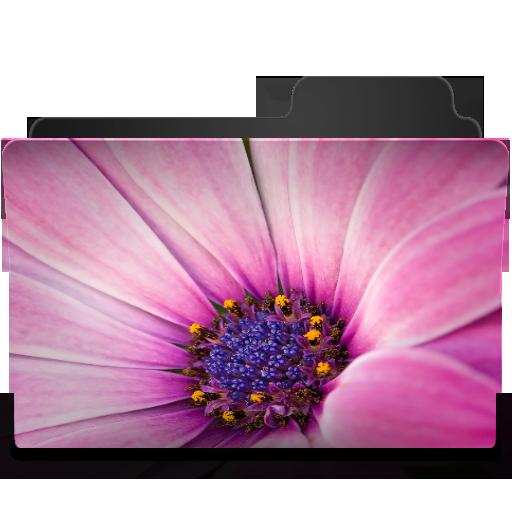 Flower Pink Icon
