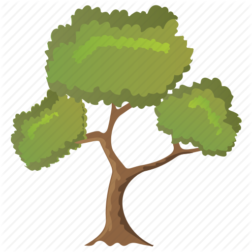 Black Willow Tree, Deciduous Tree, Ecology, Forestry