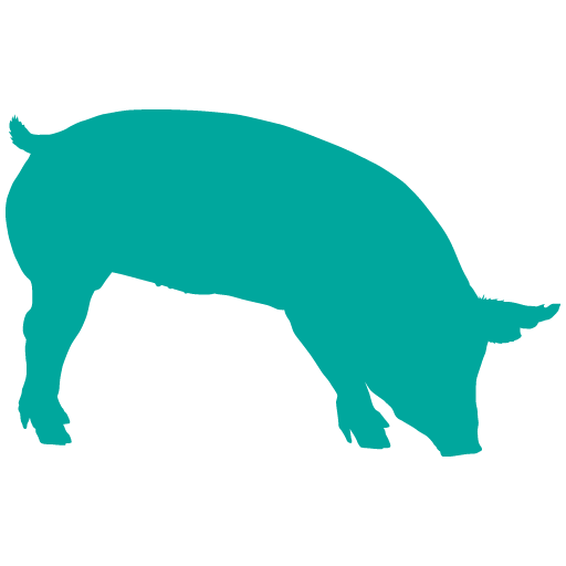Pig Icon Where Pigs Fly