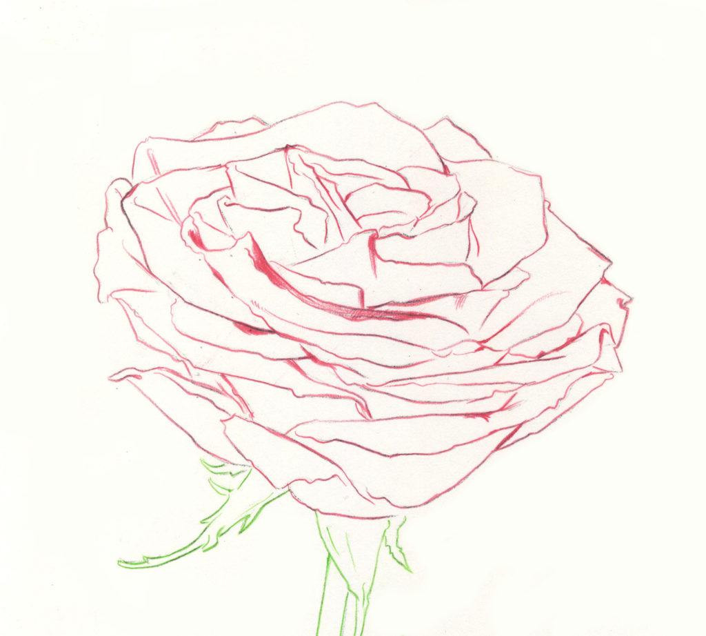 1024x922 Drawing Roses In Graphite Pencil And Colored Pencil