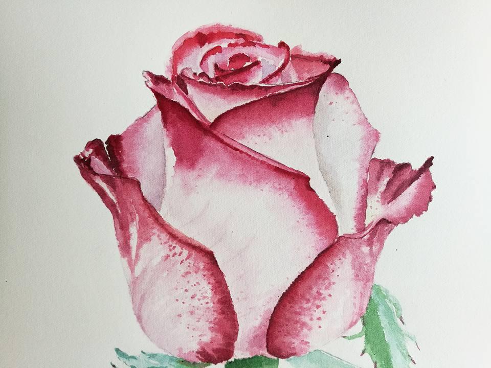 960x720 Rose Watercolour Progress