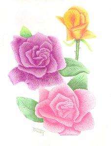 227x300 Three Roses Drawings Fine Art America