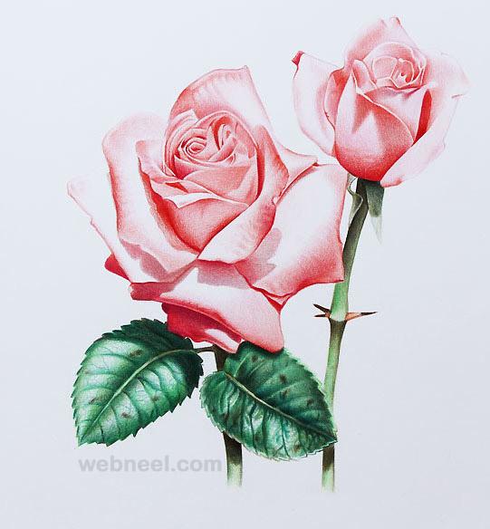 541x584 Flower Drawing 2