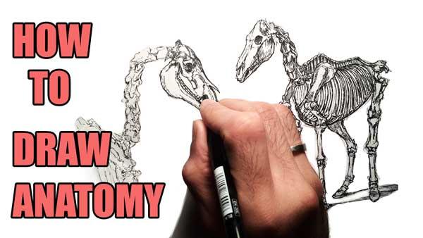 600x338 2d Animation Tutorial How To Study Anatomy Amb Animation Academy