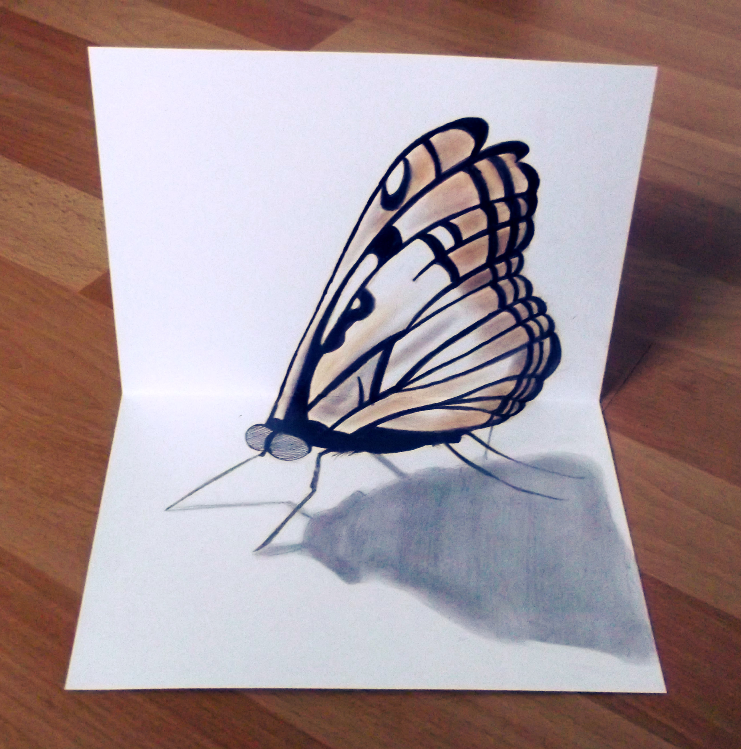 2592x2620 3d Butterfly My Portraits Amp Drawings 3d, Drawings