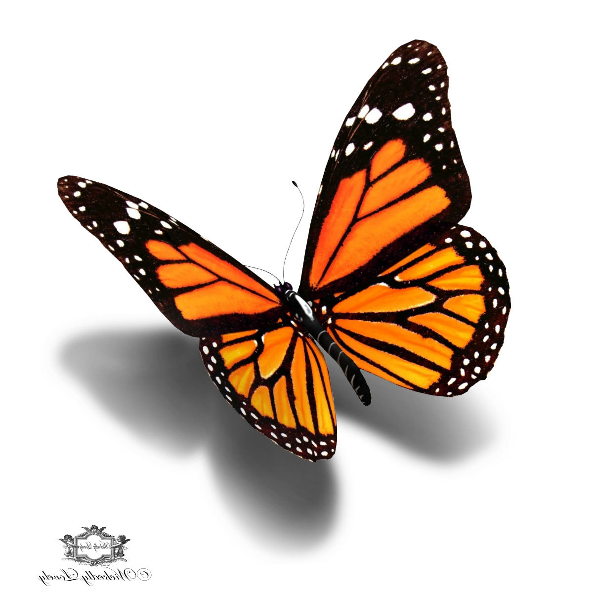1200x1200 3d Butterfly Sketch 3d Butterfly Drawing