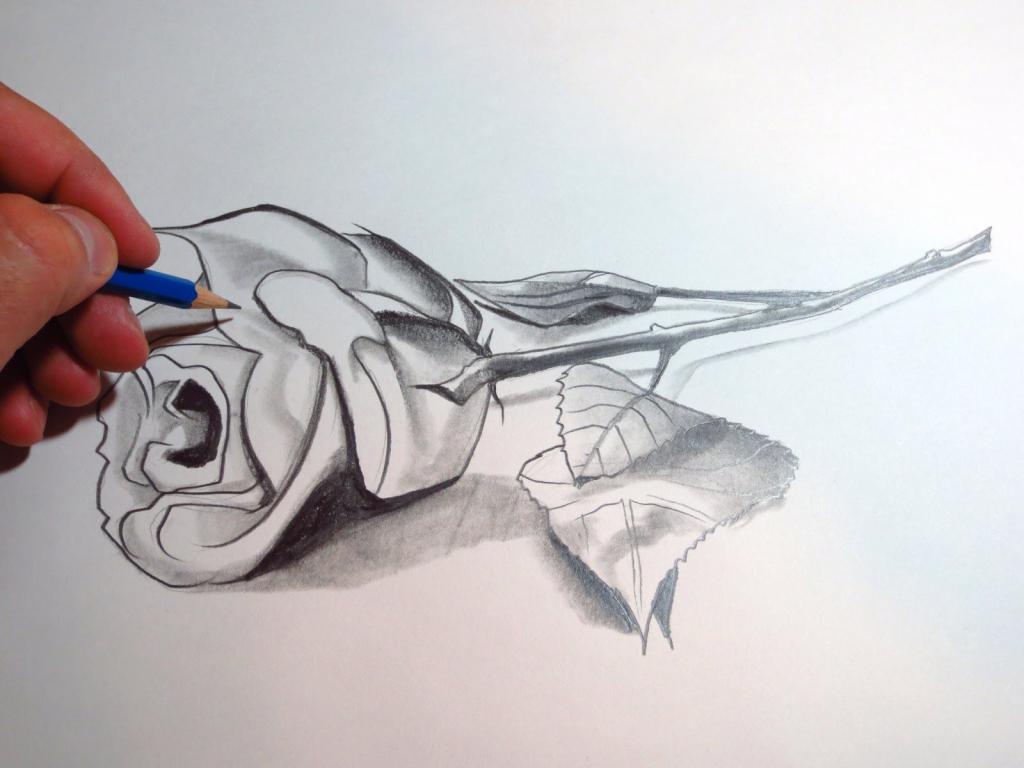 1024x768 3d Art Picturs Pencil Drawings 3d Rose Photo Drawing 3d Pencil