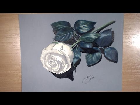480x360 drawing a rose colored pencil drawing