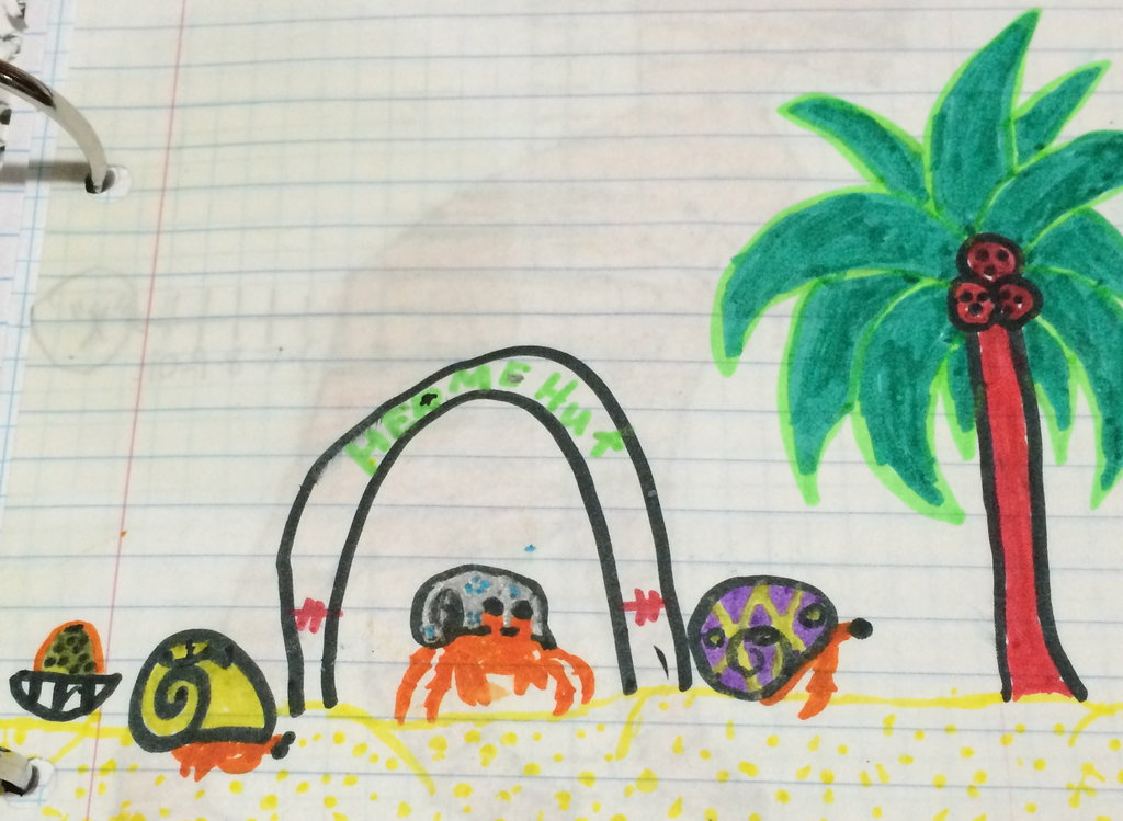 1024x749 4th Grade Drawing Of My Old Hermit Crabs! By Scarletcat1
