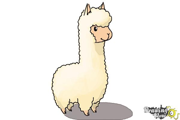 600x400 How To Draw A Llama For Kids
