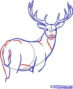 236x289 Dear Drawings How To Draw A White Tailed Deer Step 7 Drawing