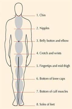 236x356 Human Anatomy Fundamentals Basic Body Proportions Vectortuts