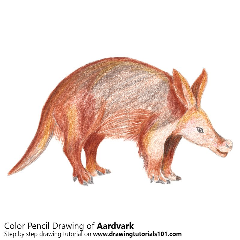 800x800 Aardvark Colored Pencils