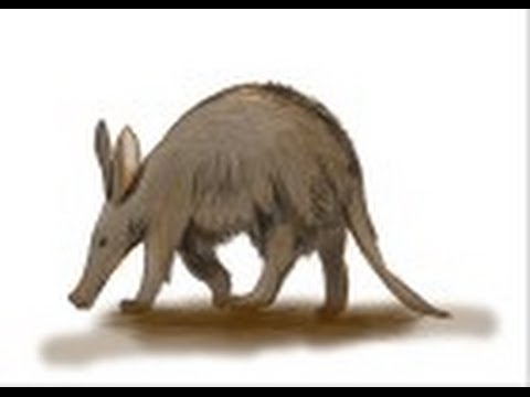 480x360 How To Draw An Aardvark