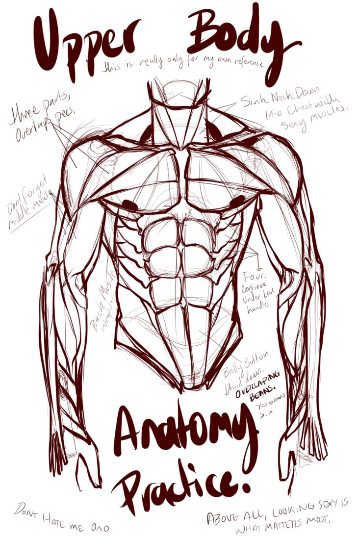 730x1095 Abs And Upper Body Anatomy Practice By L O R D G R E G