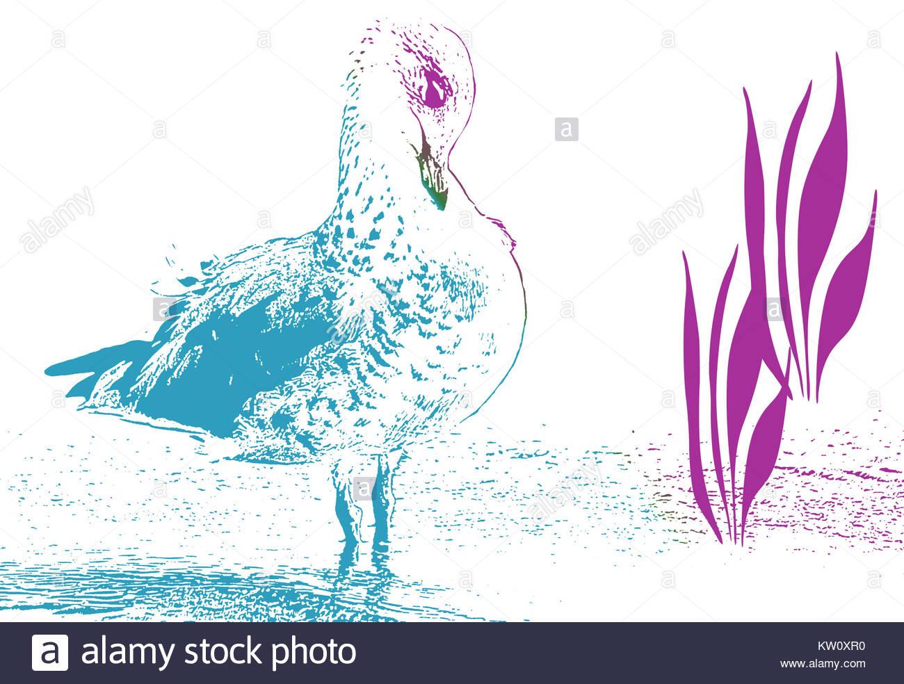 1300x984 Bird Line Drawing Stock Photos Amp Bird Line Drawing Stock Images