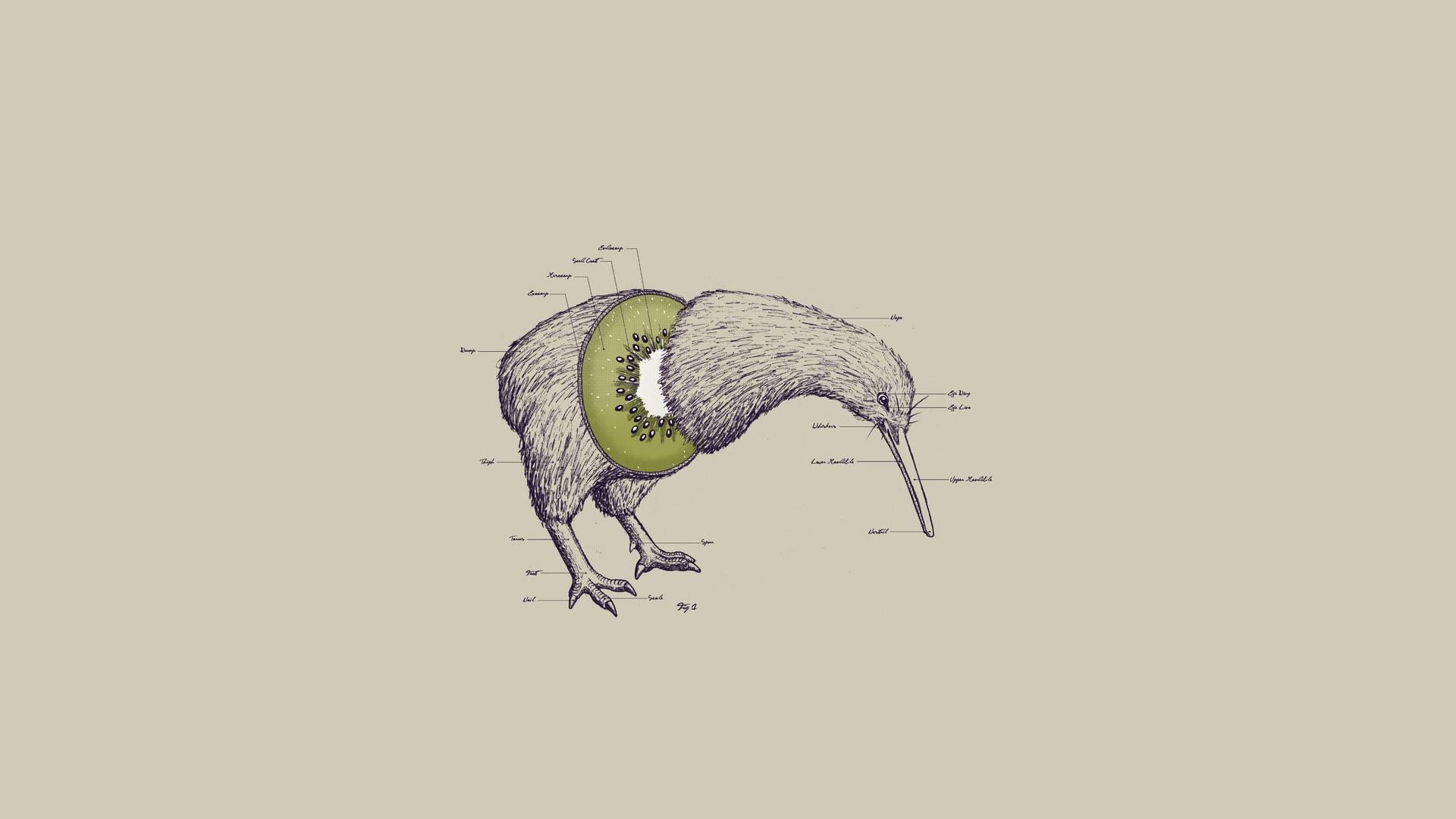 1920x1080 Wallpaper Drawing, Illustration, Birds, Animals, Abstract