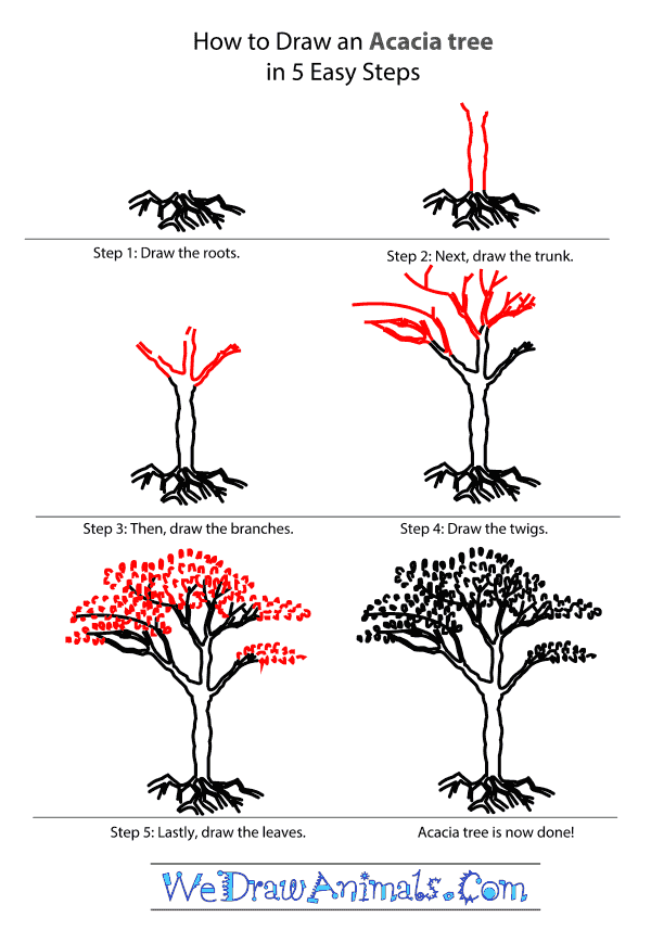 600x857 How To Draw An Acacia Tree