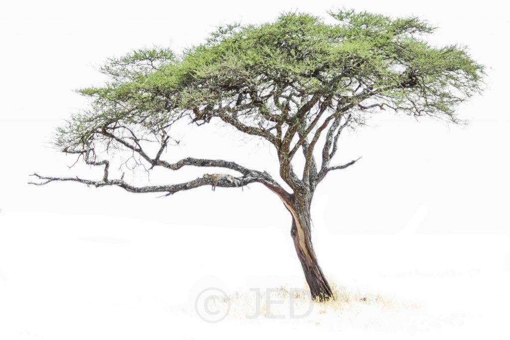 1024x683 Reclassifying The African Acacia Is It Finally Time To Embrace