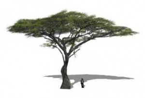 300x202 Sketchup Plants, Trees, And Shrubs Archive