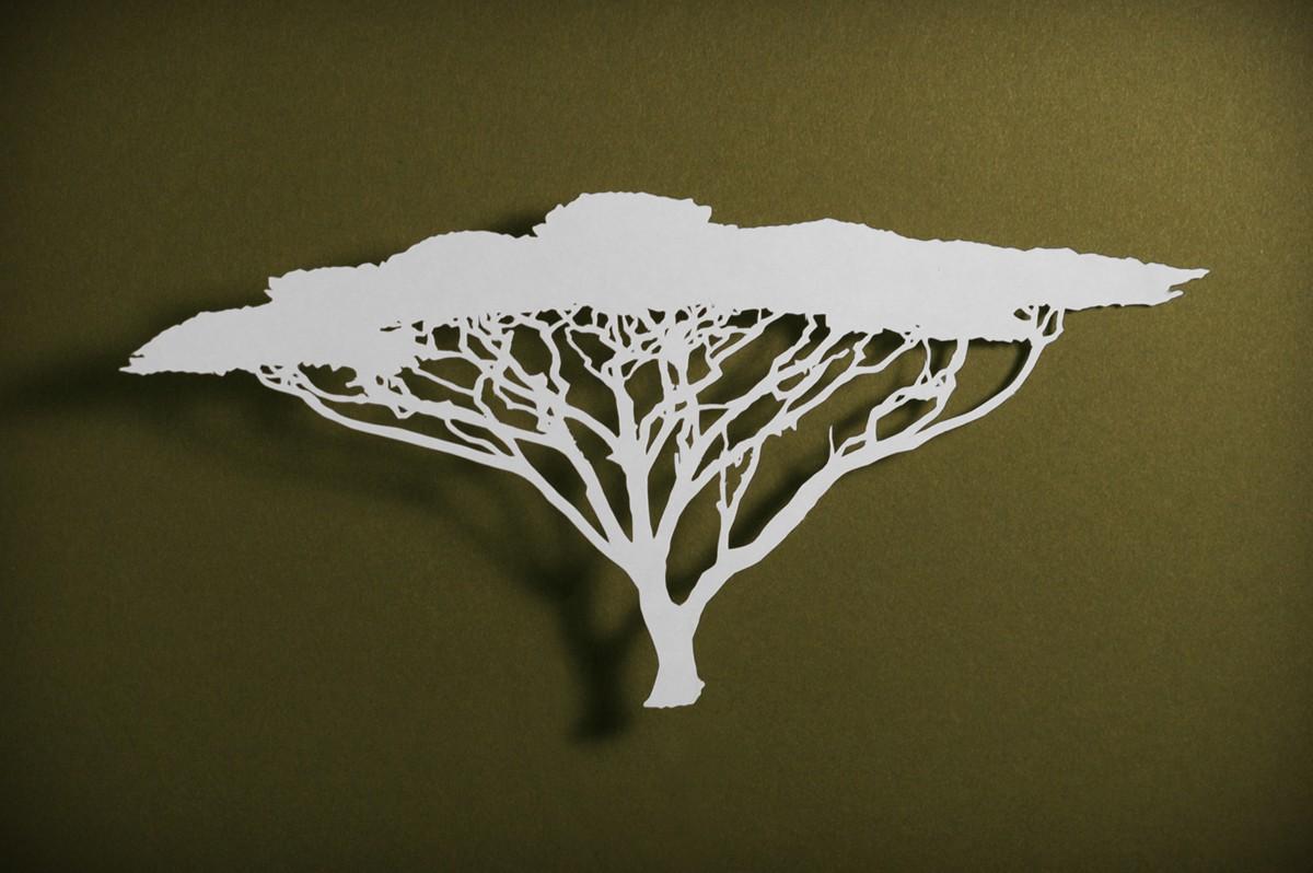 1200x798 Umbrella Thorn Acacia Tree Adoption Acacia