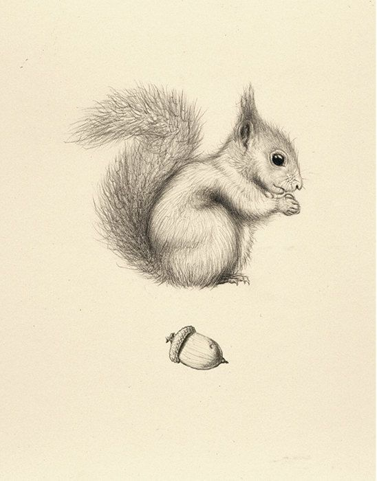548x700 36 Squirrel Drawing Acorn Card Squirrel, Drawings And Etsy