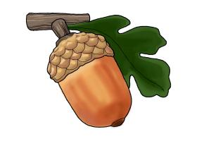 300x200 How To Draw An Acorn