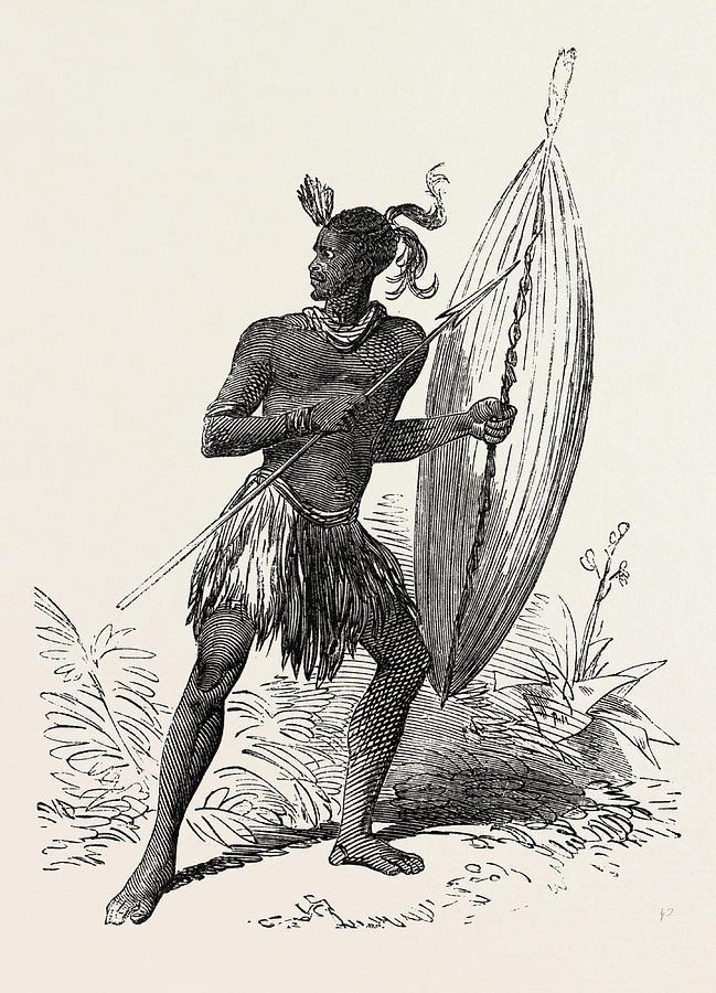 649x900 Zulu Warrior, Kaffraria, South Africa Drawing By South African School
