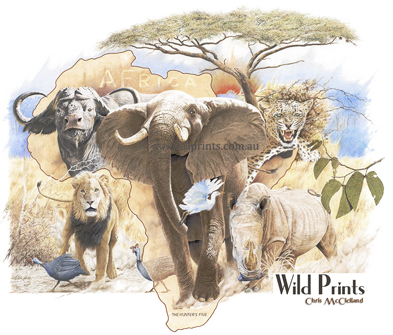 800x682 african animals wild prints blog