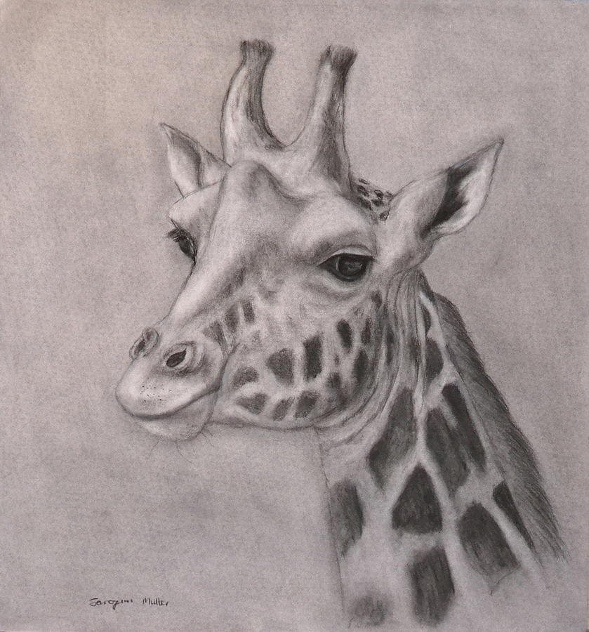 Line Drawings Of African Animals : African animal drawing at getdrawings free for