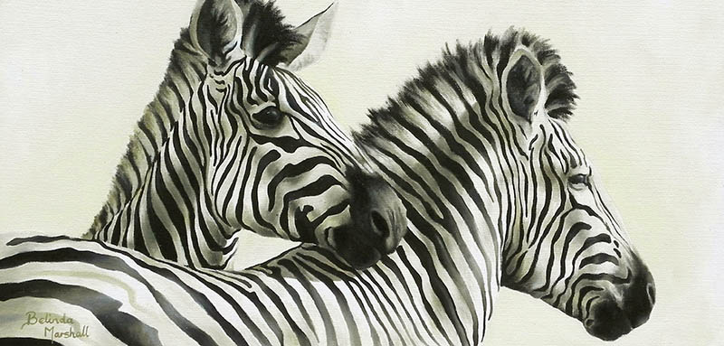 800x383 African Animal Artwork Paintings And Drawings By Belinda Marshall