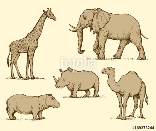500x422 African Animals. Vector Drawing Stock Image And Royalty Free