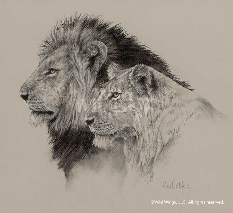 African Animals Drawing At Getdrawings Com Free For Personal Use