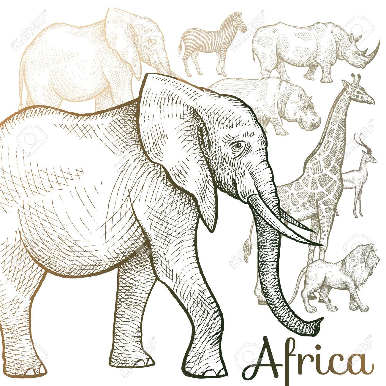 1300x1300 Poster African Animals. Vector Illustration For Book Covers