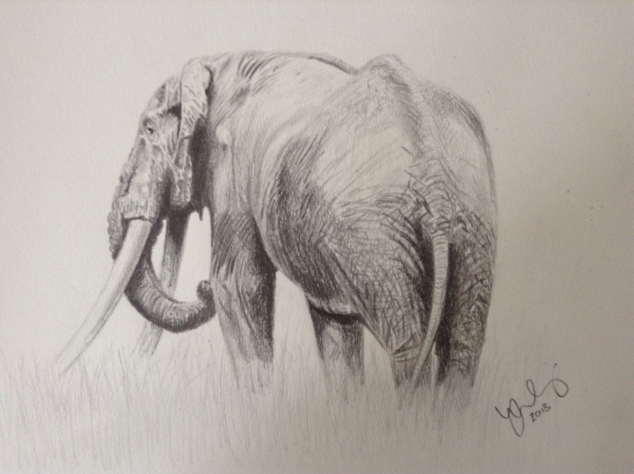 2048x1530 Elephant Drawing In Pencil. I Enjoyed Sketching An Elephant