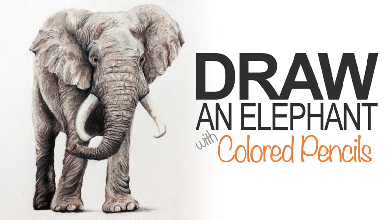 800x450 An Elephant With Colored Pencils
