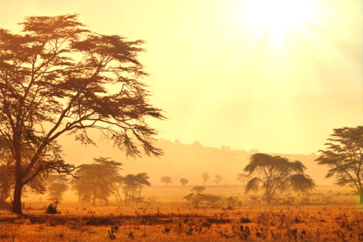 720x480 African Landscape Drawing South
