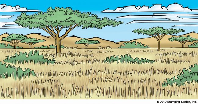 648x340 Savanna Open House Landscape Drawings, Landscaping