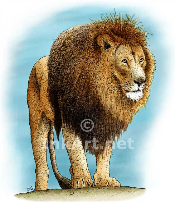 561x650 African Lion Stock Art Illustration