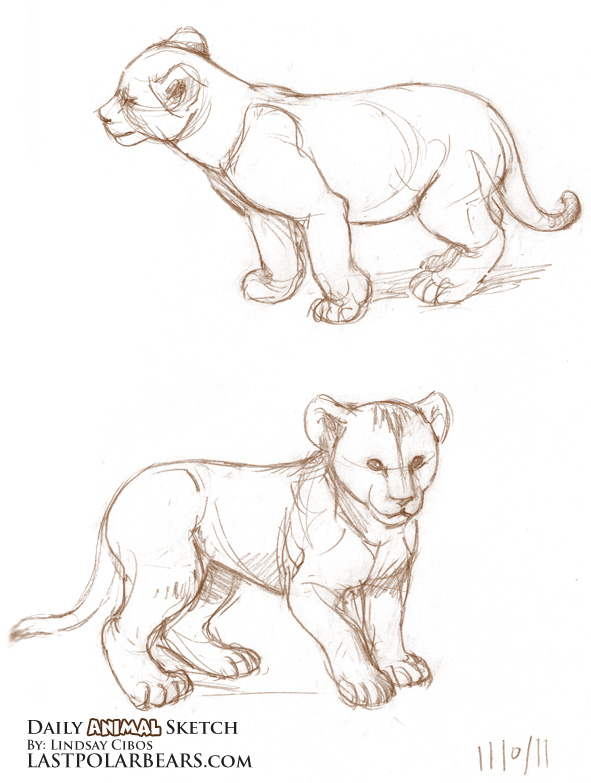 591x783 Daily Animal Sketch African Lion Cubs (3) Last Of The Polar Bears