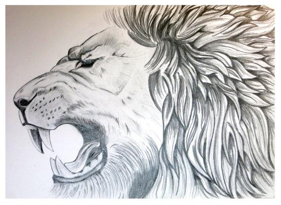 570x416 Lion Art Lion Poster Animal Sketch Graphite Drawing