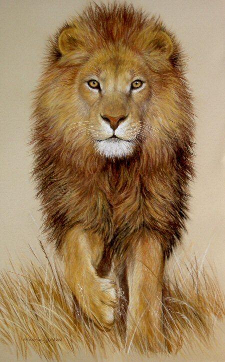 450x723 Original Pastel Drawing Stunning African Lion