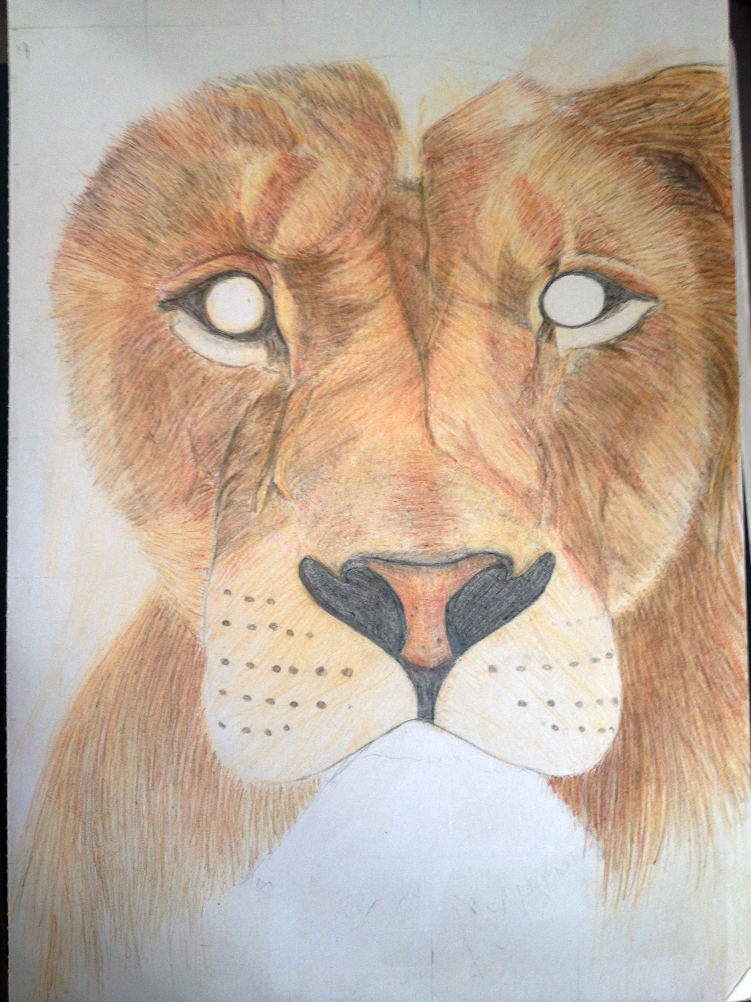 The Best Free Hannah Drawing Images Download From 50 Drawings Glenfield Model 60 Schematic Caroldoey 2448x3264 African Lion Lewis A Work In Progress