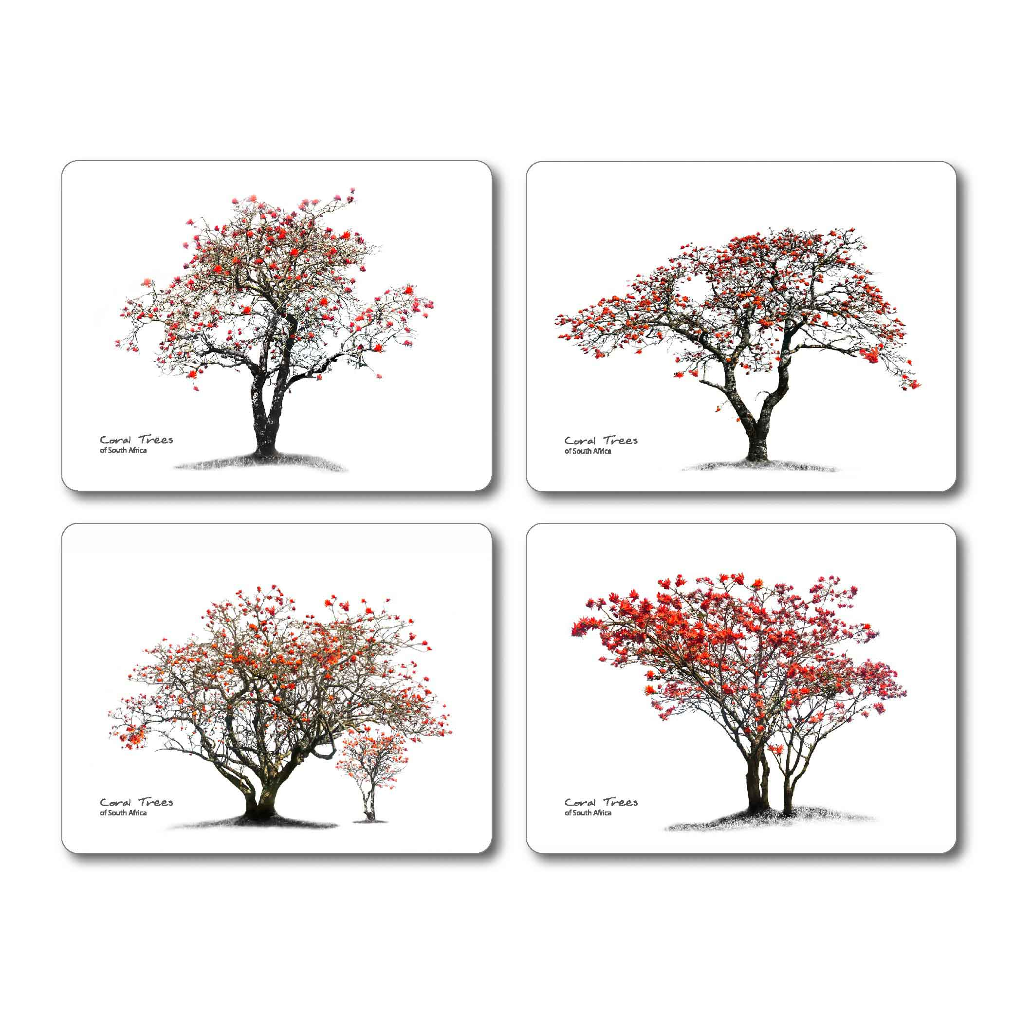 2083x2083 Coral Tree Placemats Nguni Galore