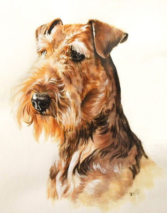 551x700 37 Best Airdale Terrier Images On Airedale Terrier