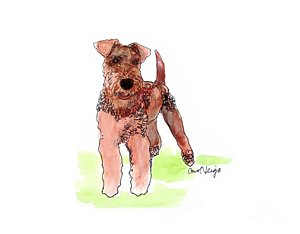 300x234 Airedale Terrier Drawings Fine Art America