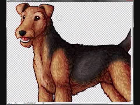 480x360 Drawing An Airedale