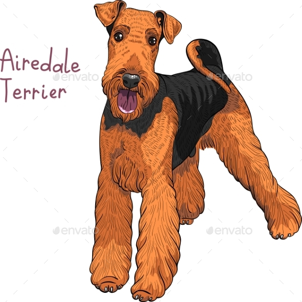 590x590 Sketch Dog Airedale Terrier Breed By Kavalenkava Graphicriver