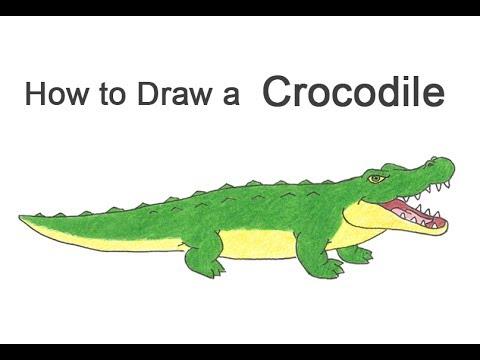 480x360 How To Draw A Crocodile Alligator (Cartoon)