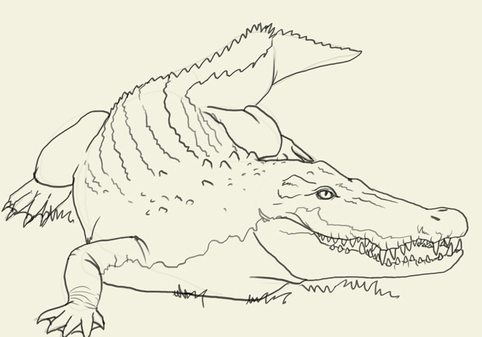 700x490 How to draw crocodile